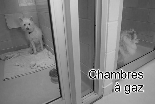 Animaux de compagnie euthanasie de chiens et chats for Chambre sans fenetre loi quebec