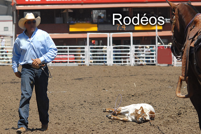 http://www.respect-animal.ca/img/spectacles-animaux-rodeos-01.jpg